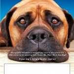 """Jeff Moore Photography's """"Excuse Me, May I Shoot Your Dog"""" project poster 1"""